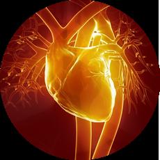 Центр<br /> сердца