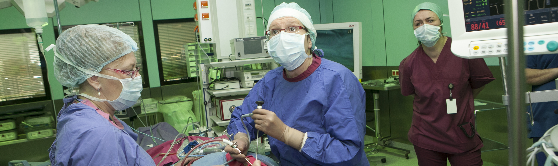 Dr Annika Jussi operatsioonil